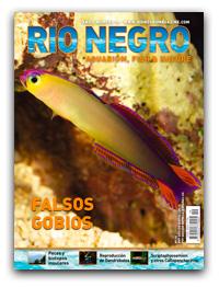 Revista Rio Negro 19