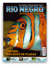 Revista Rio Negro 15