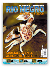 Revista Rio Negro 14