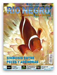 Revista Rio Negro 16
