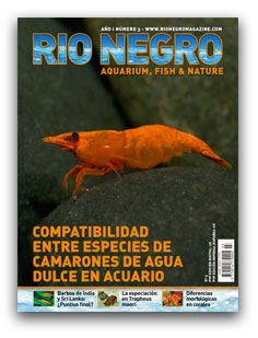 Revista Rio Negro 18