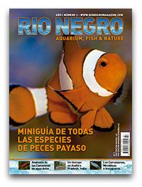 Revista Rio Negro 7