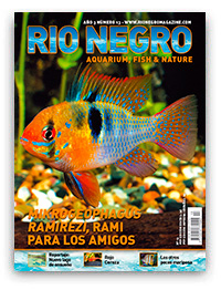 Revista Rio Negro 13