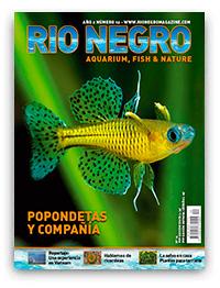 Revista Rio Negro 12