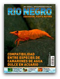 Revista Rio Negro 3