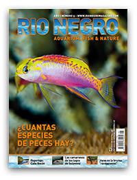 Revista Rio Negro 5