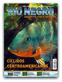 Revista Rio Negro 20