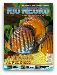 Revista Rio Negro 21