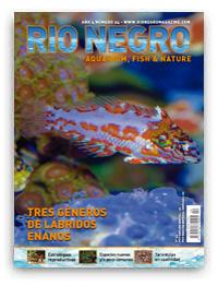 Revista Rio Negro 24