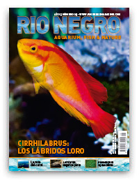Revista Rio Negro 25