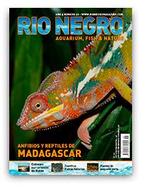 Revista Rio Negro 26