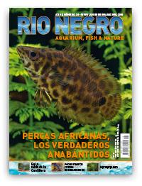 Revista Rio Negro 28