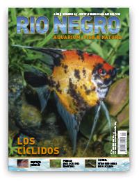 Revista Rio Negro 29